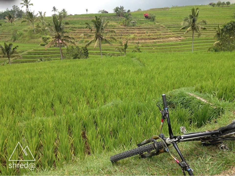 mountain bike lying in front of a rice field